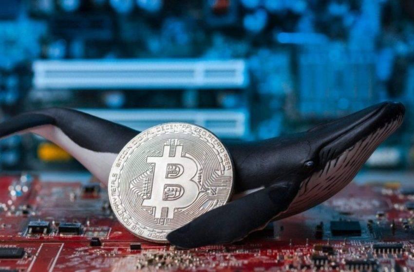 Milyoner Bitcoin cüzdanları sayısı 20 bini aştı