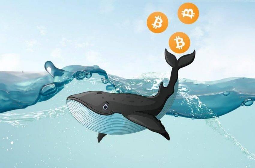 Bitcoin balinasından dev transfer!