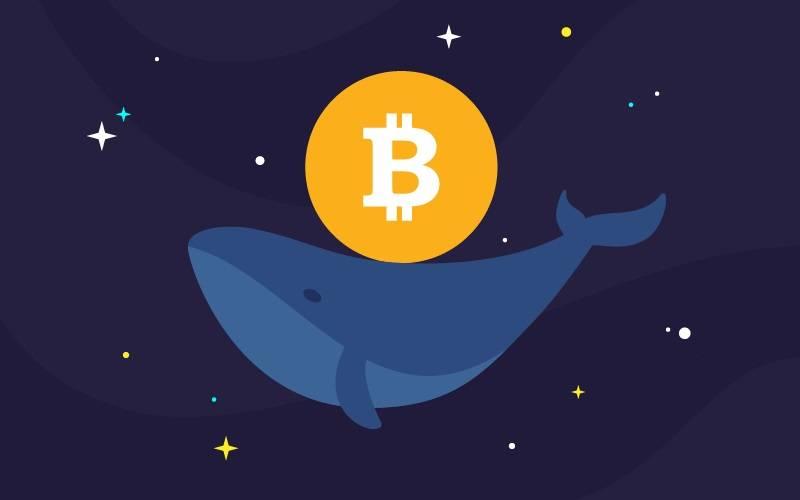 Bitcoin balina hesapları artıyor!