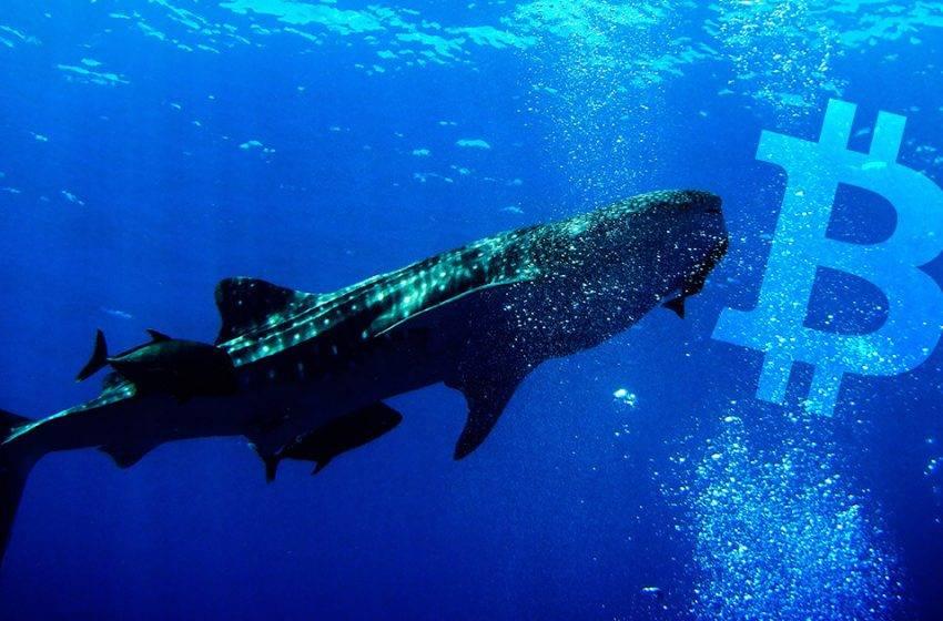 Bitcoin balinalarının sayısı azalıyor!